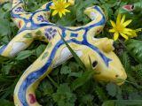 Foto Salamander