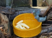 Vogeltränke gelb